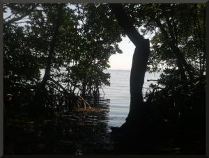 Weedon Island-1